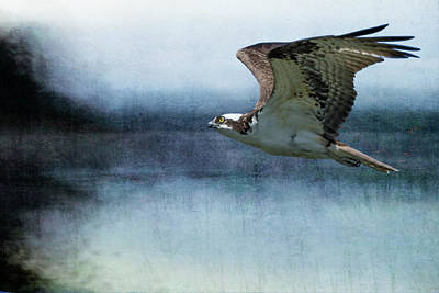 Photograph - The Flight Of The Osprey No. 1 by Belinda Greb