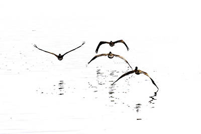 Photograph - The Flight Of The Pelicans  by Menachem Ganon