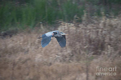 Photograph - the Flight by Rod Wiens