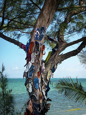 Photograph - The Flip Flop Tree by Mary Lee Dereske