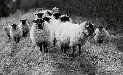 Photograph - The Flock 1 by Peter Skelton