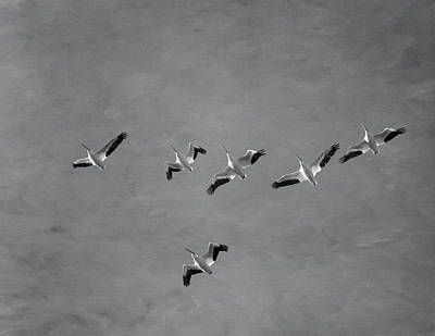 Pelican Photograph - The Flock by Kim Hojnacki