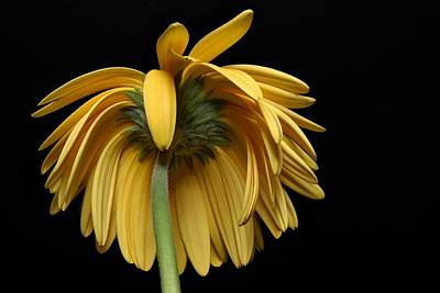 Flower Photograph - The Flop by Dan Holm