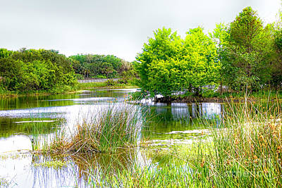 Photograph - The Florida Wetlands by Rene Triay Photography