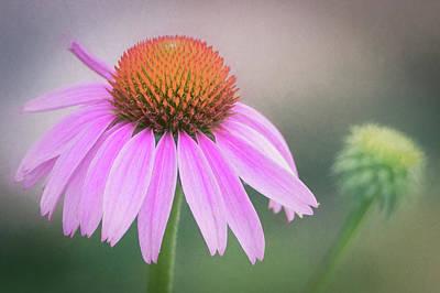Photograph - The Flower At Mattamuskeet by Cindy Hartman