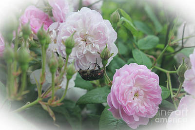 Photograph - The Flower Beetle On Pink Flowers by Donna Munro