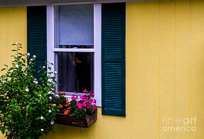 Photograph - The Flower Box by William Norton