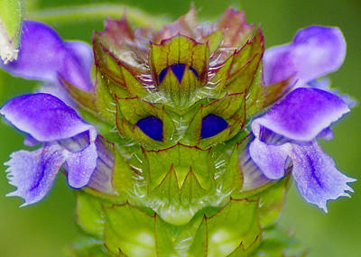 Photograph - The Flower King by Ben Upham III