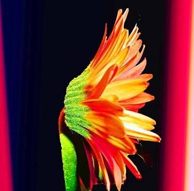 Photograph - The Flower Portrait by Vilma Zurc