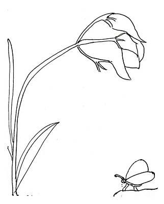 Drawing - The Flower by Sophia Landau