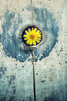Photograph - The Flower Within by Tara Turner