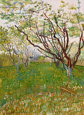 Apple Painting - The Flowering Orchard, 1888 by Vincent Van Gogh