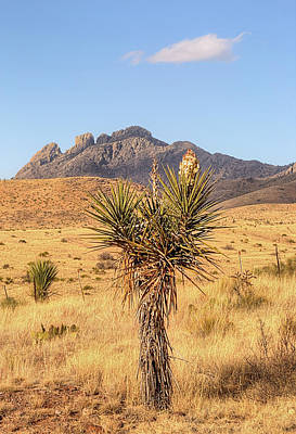 Photograph - The Flowering Yucca And Sawtooth Peak by JC Findley