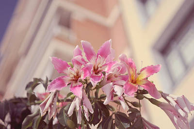 Photograph - The Flowers Of Malaga by Jenny Rainbow