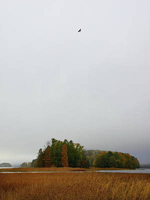 Photograph - The Flying Crow Over The Island by Jouko Lehto