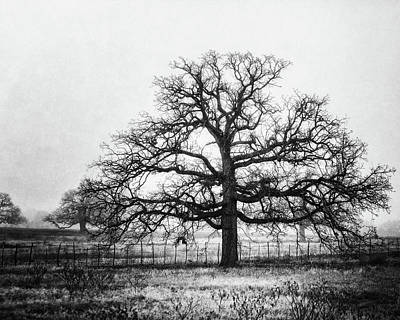 Photograph - The Foggy Oak In Black And White by Lisa Russo