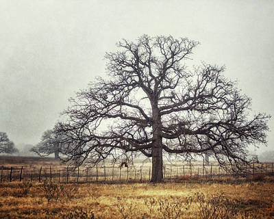 Photograph - The Foggy Oak by Lisa Russo