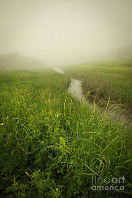 Photograph - The Foggy Trail by Sandy Adams