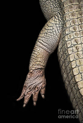 Digital Art - The Foot And Leg Of An Albino Alligator  by Jim Fitzpatrick