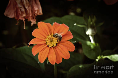 Photograph - The Foraging Bee by Cendrine Marrouat