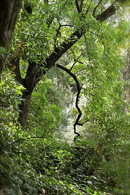 Photograph - The Forest Beckons by Michele Myers