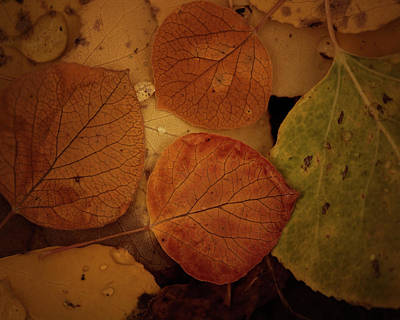 Photograph - The Forest Floor by Erica Kinsella