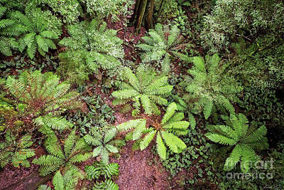 Photograph - The Forest Floor by Linda Lees