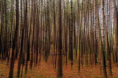 Photograph - The Forest by Kimberly Rentler