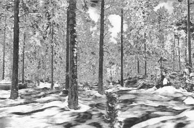 Digital Art - The Forest Of Snows by Mario Carini