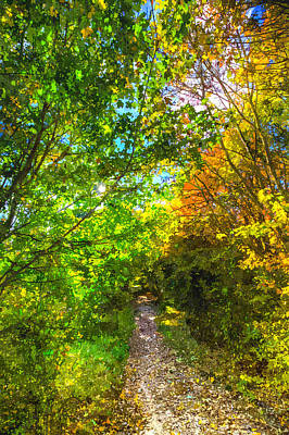 Photograph - The Forest Path Art by David Pyatt