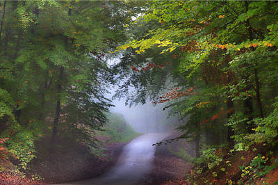 Photograph - The Forest River by Rene Pronk