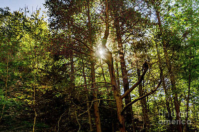 Photograph - The Forest Sun by William Norton