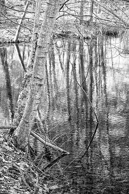 Photograph - The Forest Within by Kathi Mirto