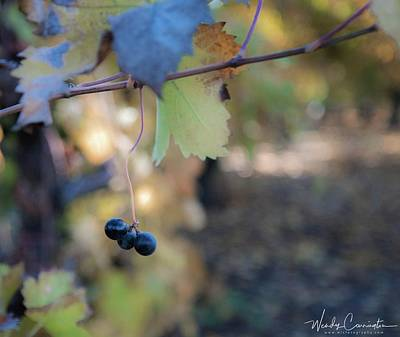 Photograph - The Forgotten Grape by Wendy Carrington