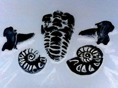 The Fossil Arrangement  With Black Reflection Of Original Painting Art Print by Barbara Searcy