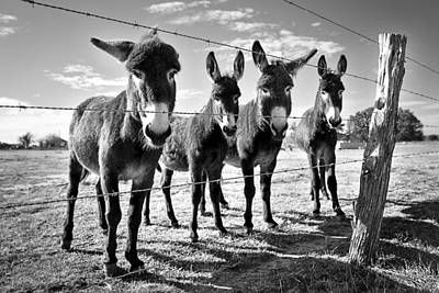 Photograph - The Four Amigos by Sharon Jones