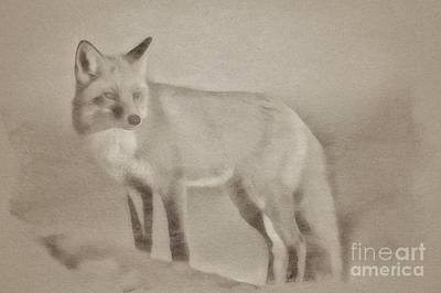 Animals Drawings - The Fox by Esoterica Art Agency
