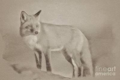 Kingfisher Drawing - The Fox by John Springfield