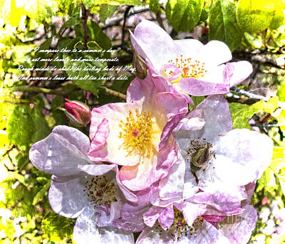 Photograph - The Frailty Of Summer Roses And Of Love by Brenda Kean
