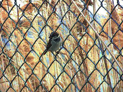 The Free Sparrow Art Print