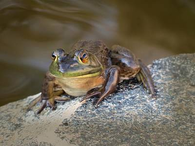 Photograph - The Frog by MTBobbins Photography