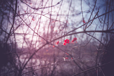 Photograph - The Fruits Of Spring by Radek Spanninger