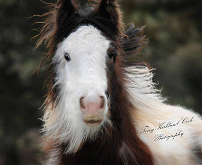 The Fuzziest Gypsy Foal Art Print