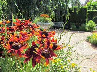 Photograph - The Garden In August by Kathie Chicoine