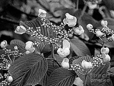 Photograph - The Garden Party by Nancy Kane Chapman