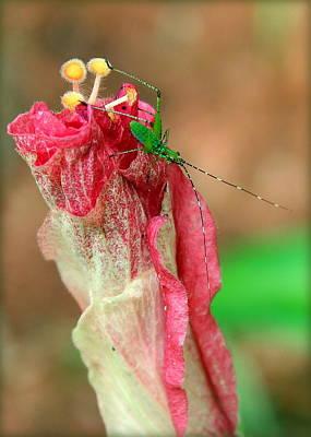 Photograph - The Garden Prince by Faith Williams