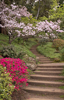 Photograph - The Garden Steps by Susan Rissi Tregoning