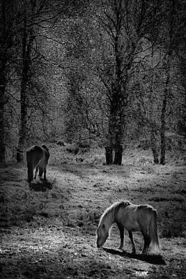 Photograph - The Garrano by Edgar Laureano