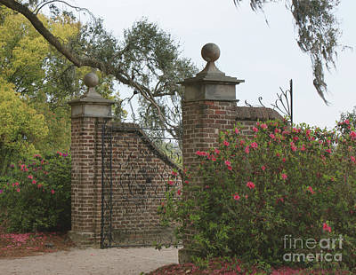 The Gate At Boone Hall Art Print by Roger Potts