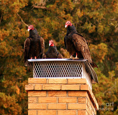 Photograph - The Gathering Of Vultures by Clayton Bruster